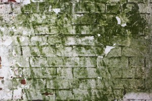 How To Clean Mold Off Of Bricks