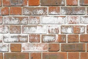 Efflorescence on brick wall